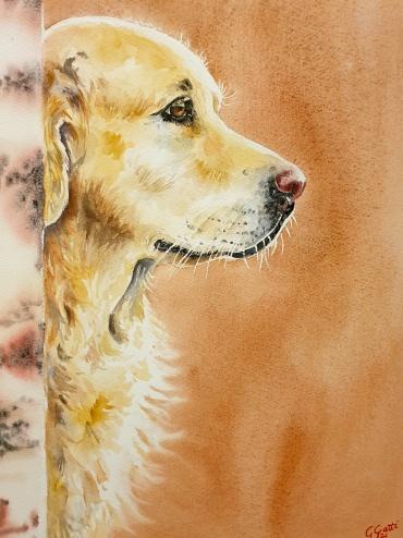 Golden Retriever - Pet portrait - 220 euro - Watercolour on paper 30x40 cm