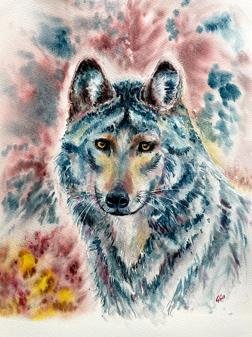 Blue wolf - Watercolour on paper
