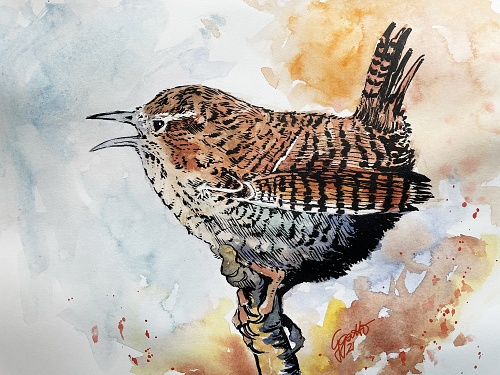 Crazy Wren - watercolour and ink on paper