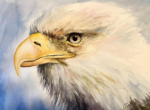 Bald eagle - Watercolour on paper 30x40 cm
