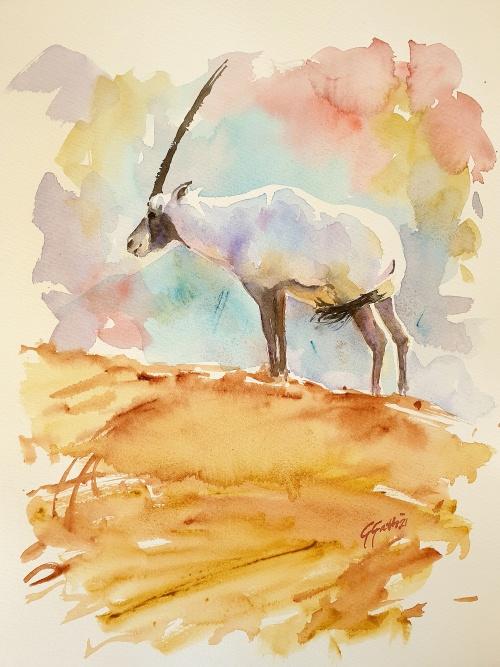 Arabian Oryx - Orice d'Arabia - watercolour on paper 30x40 cm